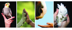 animal and hand banner